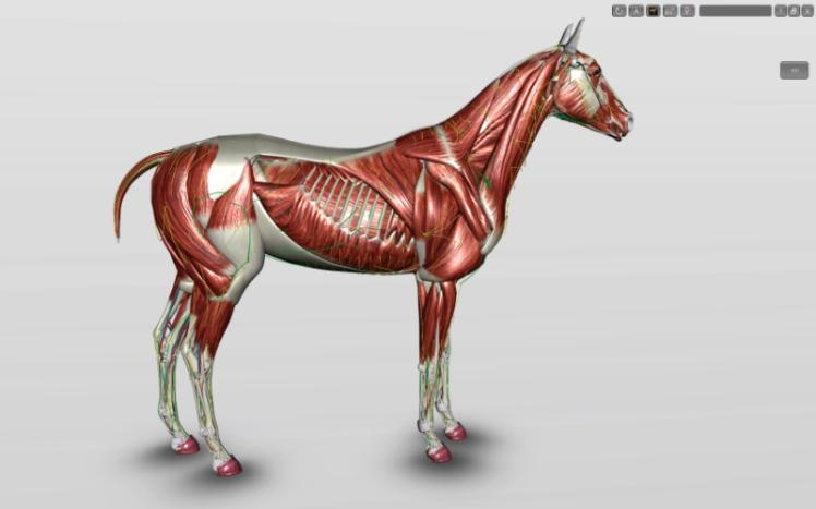 cavalo-3d-musculatura